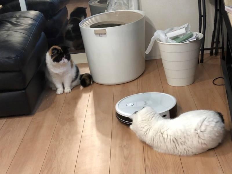 お掃除ロボと猫たち