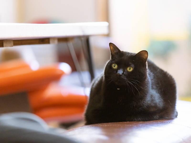 黒猫「九兵衛」
