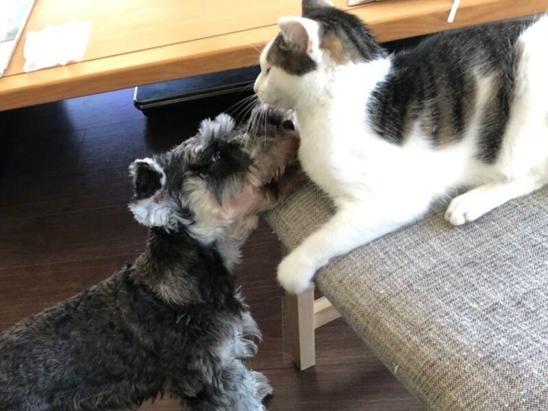 遊ぶ犬と猫