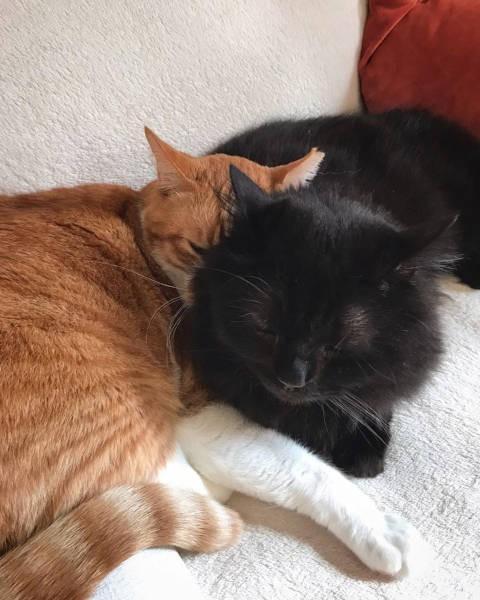 先住猫、茶トラ猫きんくんと黒猫ごえもんくん