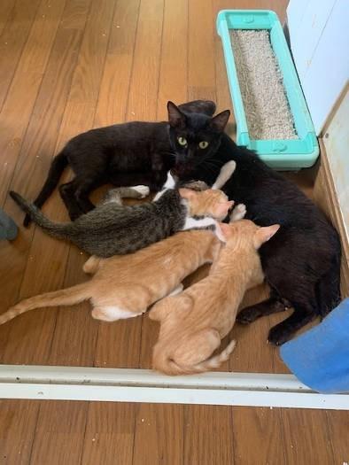 子猫にお乳をやる黒猫