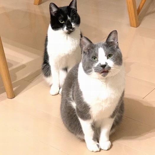 猫 怖い 顔