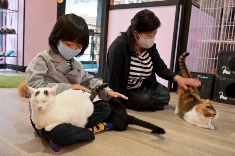 猫カフェで猫と戯れる親子