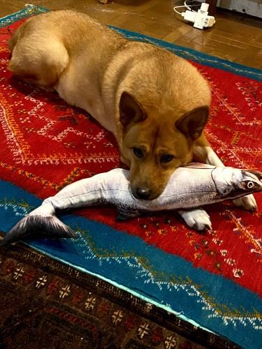 犬と魚のぬいぐるみ