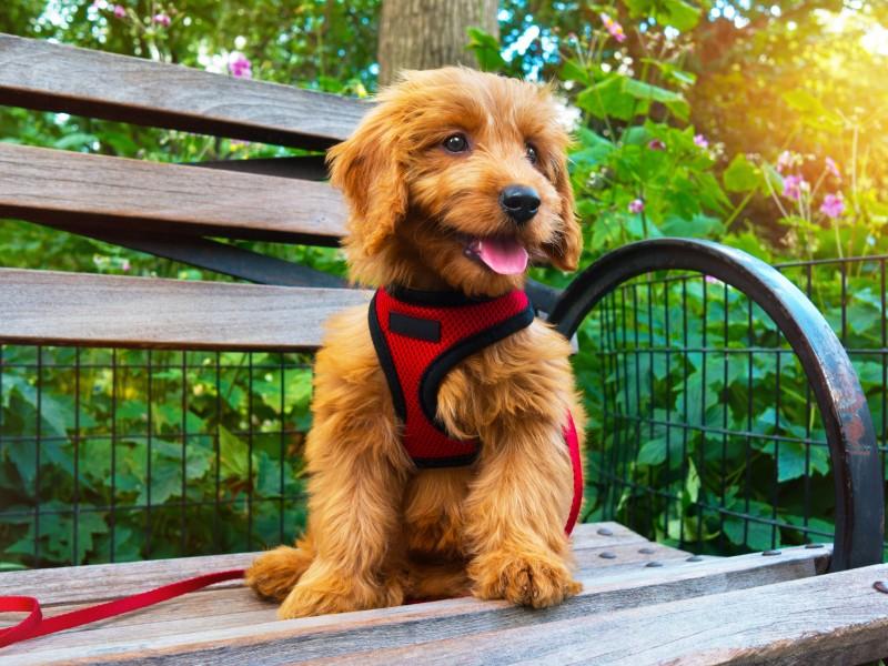 ベンチの上のイヌ