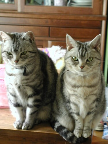 いつも一緒だったクリス(左)とココ(右)。顔は似ているような・似てないような…?ココのほうが少し色が薄く、小柄でした