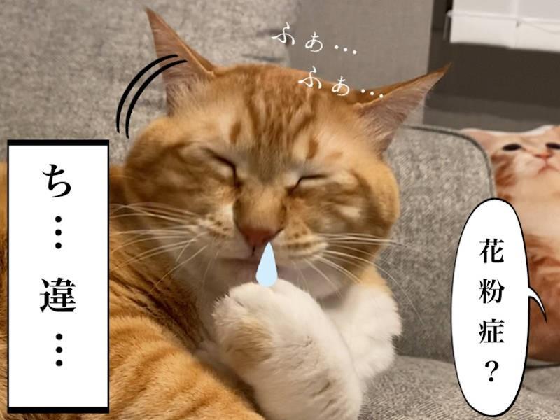 猫写真マンガ「グッピーのたぷたぷ日記」3コマ目