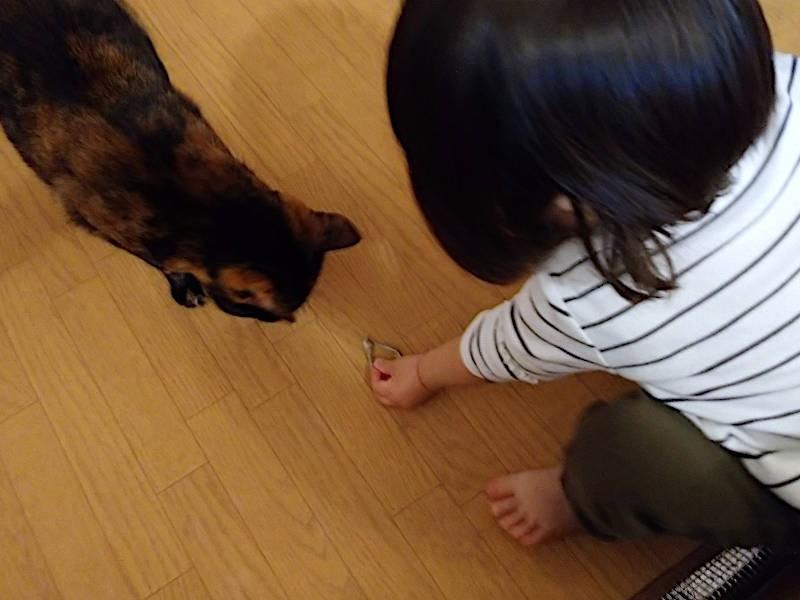 サビ猫「あんず」ににぼしをあげる娘