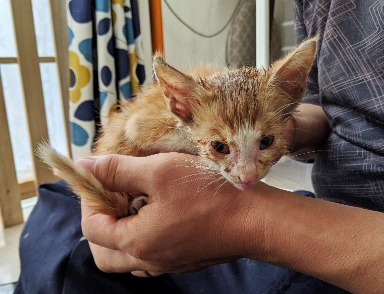 ガリガリの子猫