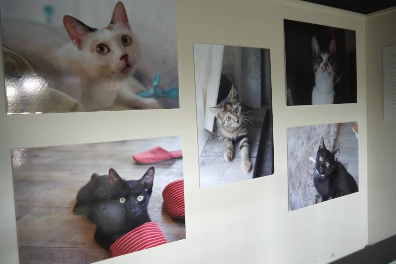 保護猫カフェを卒業した猫さんたちの写真