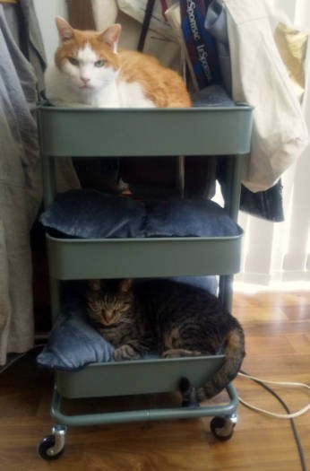 キャスター付きワゴンで寝る猫たち