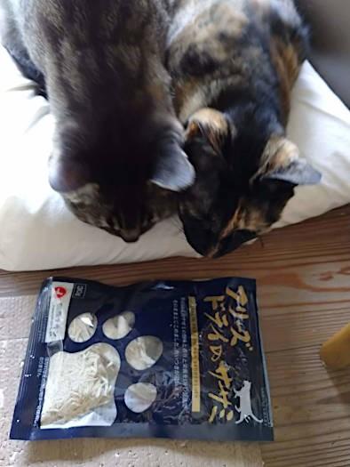 オヤツを見る猫2匹