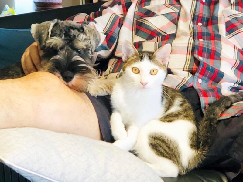 ひざのうえでくつろぐ犬と猫