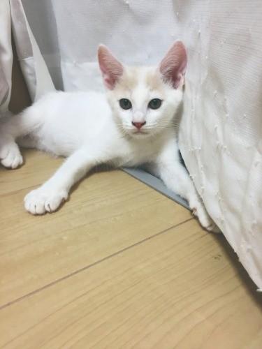 猫 サンシャイン 池崎 保護 スマイル君(保護猫)の今現在(2021最新)は何してる?その後里親は見つかったのか?