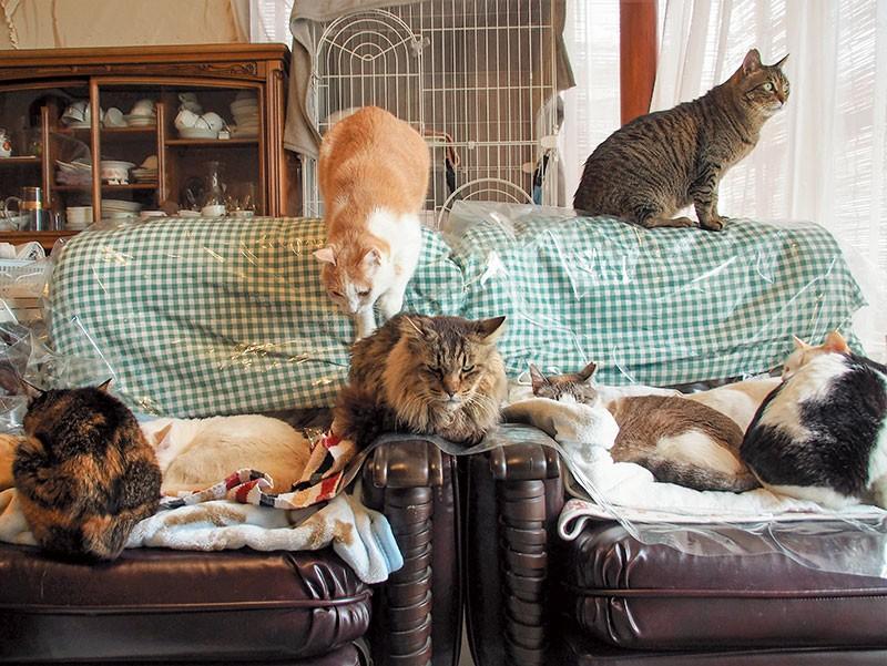 シェルターの猫たち
