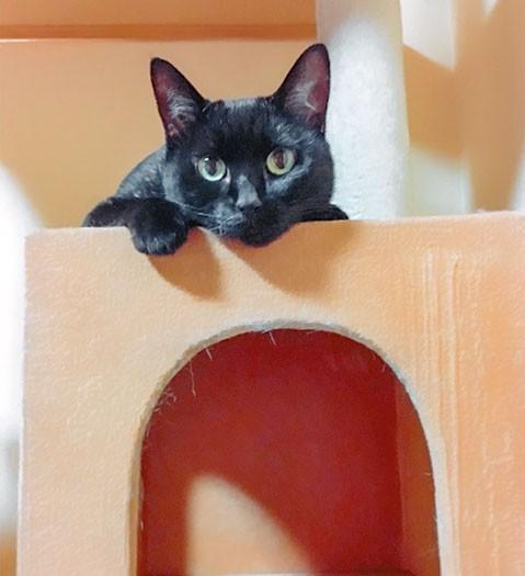 黒猫あずきちゃん