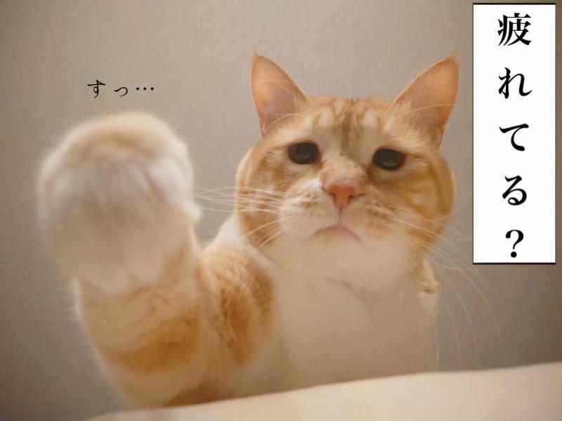 お太りさま猫ぐっぴー写真マンガ「ぐっぴーのたぷたぷ日記」