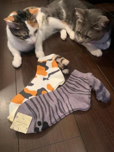 靴下と2匹の猫