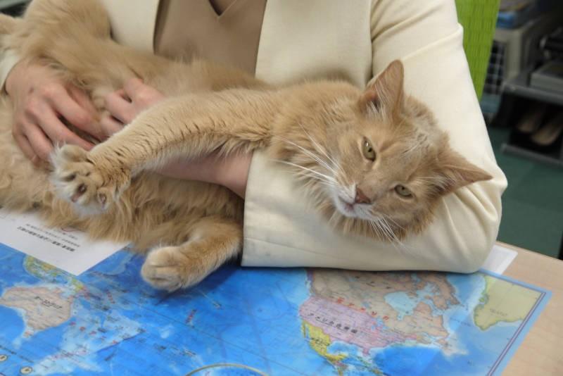 お客様にもよく遊んでもらう猫「レオ社長」