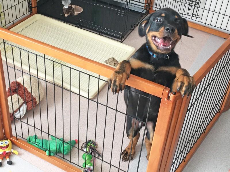サークルの中の犬