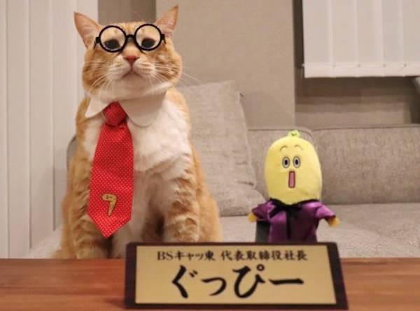 BSキャッ東 代表取締役社長「ぐっぴー」と企画部員のナナナ氏