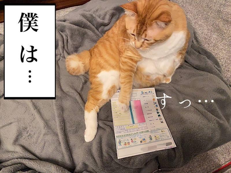 猫写真マンガ「グッピーのたぷたぷ日記」6コマ目