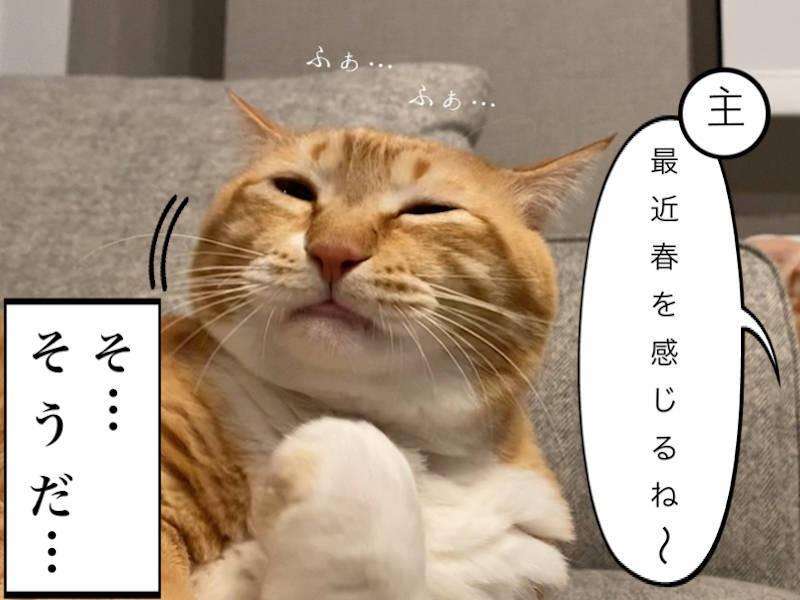 猫写真マンガ「グッピーのたぷたぷ日記」1コマ目