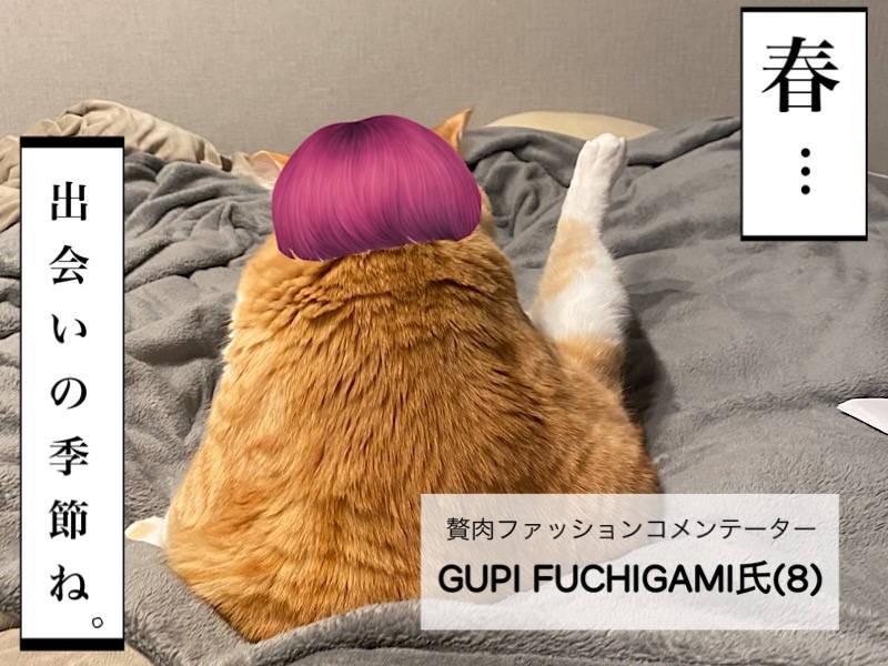 お太りさま猫ぐっぴー写真マンガ「ぐっぴーのたぷたぷ日記」1コマ目