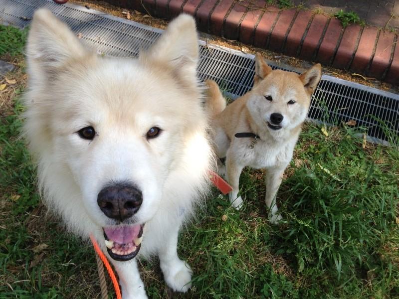 大型犬と豆柴