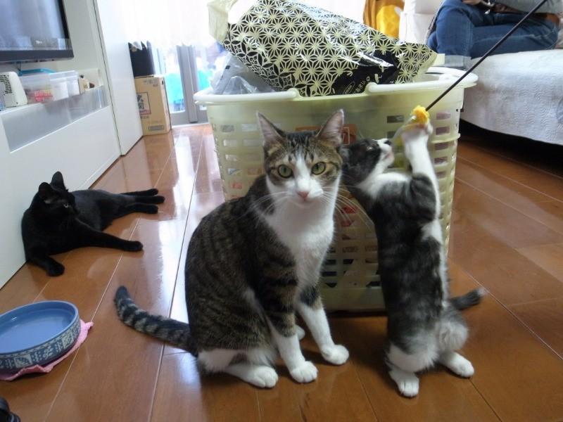 多頭 猫 飼い の