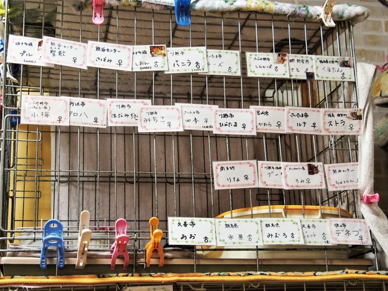 ケージに貼られたたくさんの保護猫の名札