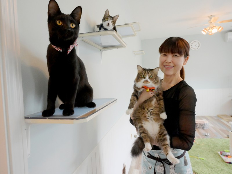 猫 カフェ 保護