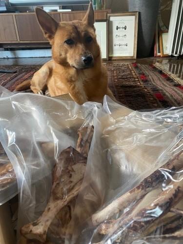 犬と鹿の骨
