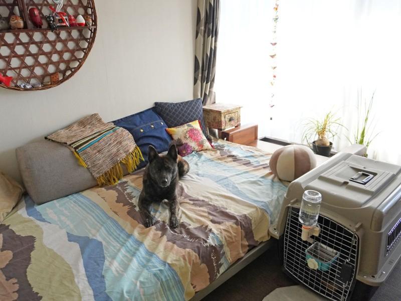ベッドの上に乗る犬