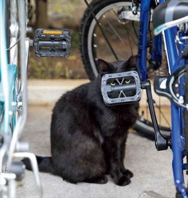 自転車のペダルからのぞく猫