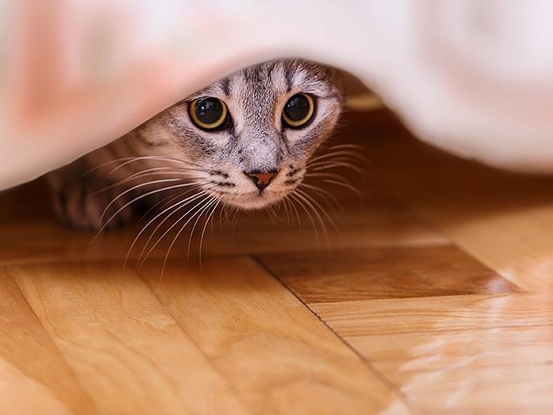 物陰から顔を出す猫