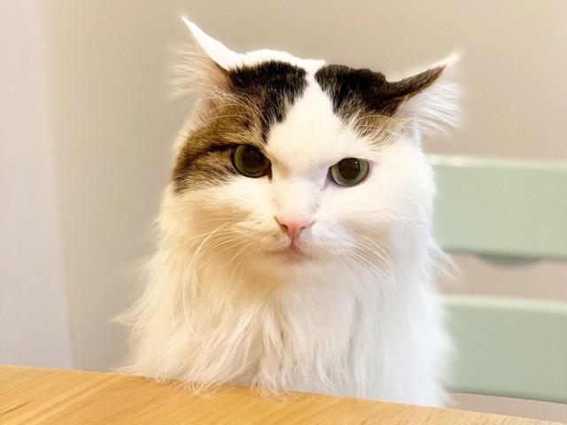 """猫ブーム」到来!""""猫コミュニティ""""に注目しています:編集部コラム ..."""