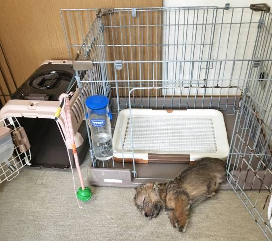 犬用のクレートとトイレ