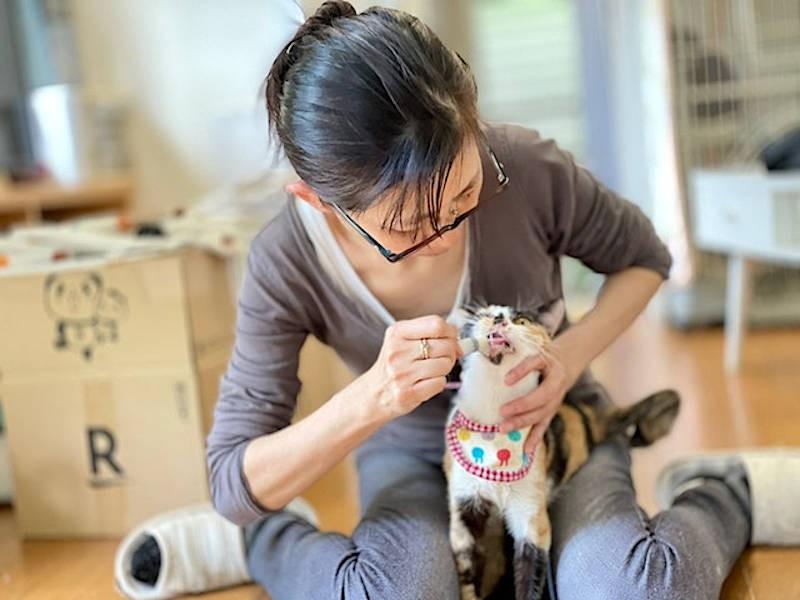 猫に給餌する吉田獣医師
