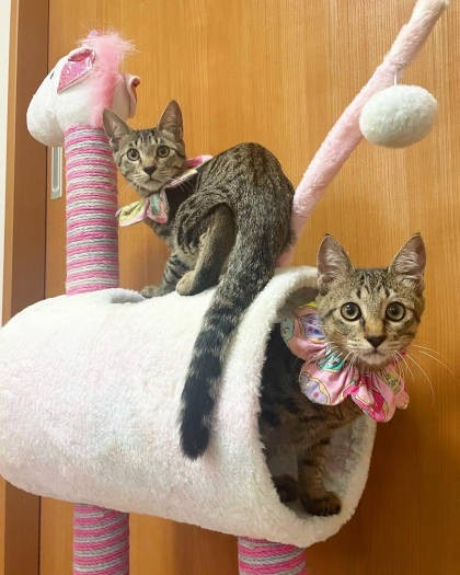 大盛のぞみ猫マンガ「やっぱ、猫じゃけぇ」キジトラ猫兄弟