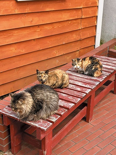庭の猫たち