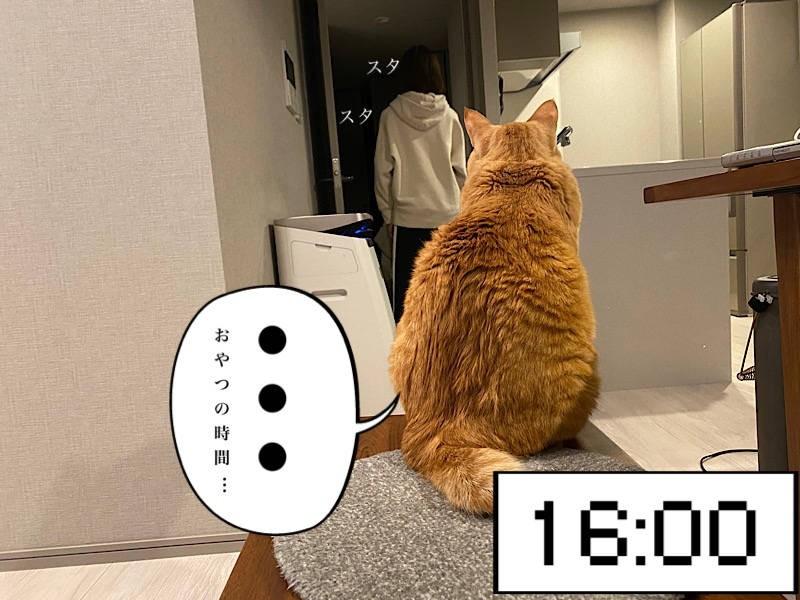 猫写真マンガ「ぐっぴーのたぷたぷ日記」4