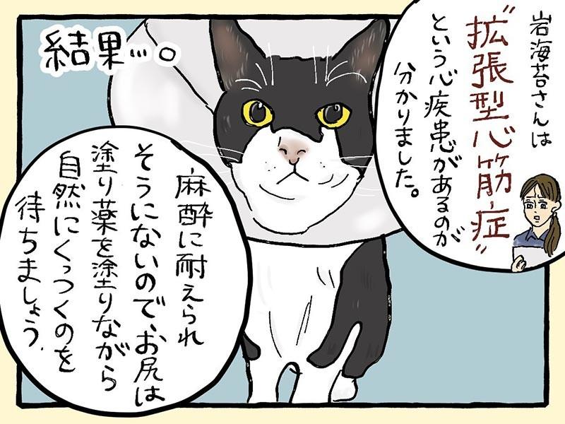 大盛のぞみ猫マンガ「やっぱ、猫じゃけぇ」③コマ目