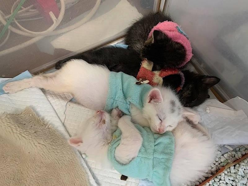 固まって眠る子猫たち