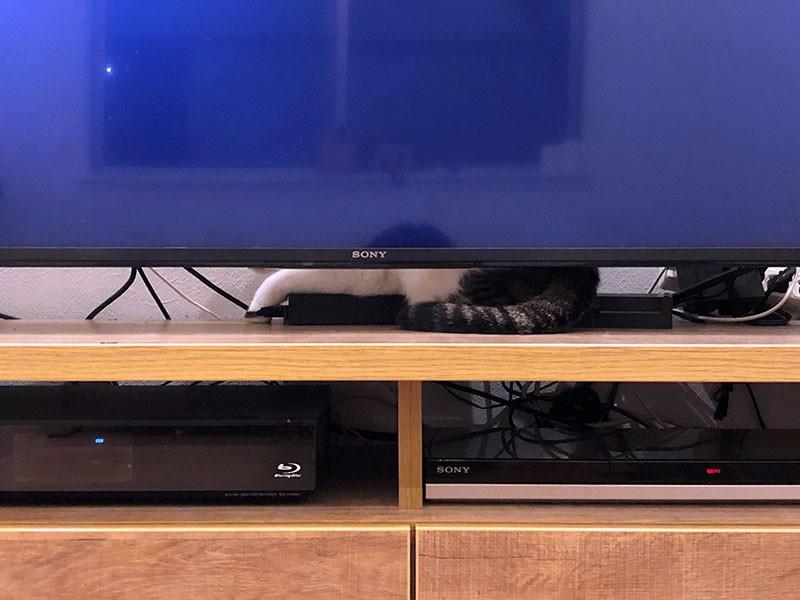 テレビのすき間から漏れ出る猫のしっぽ
