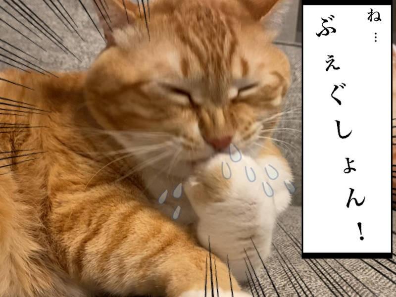 猫写真マンガ「グッピーのたぷたぷ日記」2コマ目