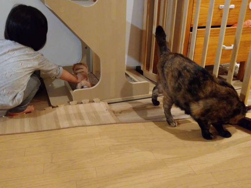 猫の爪とぎで、ぬいぐるみの爪(?)をとがせる娘とサビ猫「あんず」