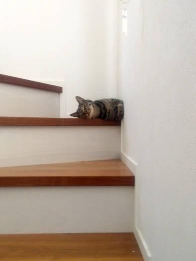 壁に香箱座りするキジトラ猫「アル」