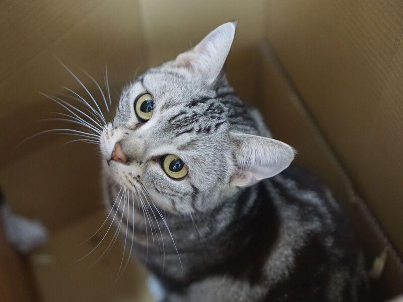 箱に入った猫