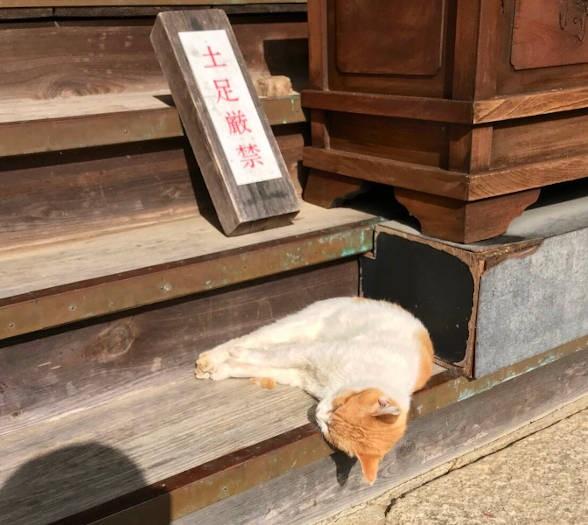 熟睡して階段からずり落ちそうな猫
